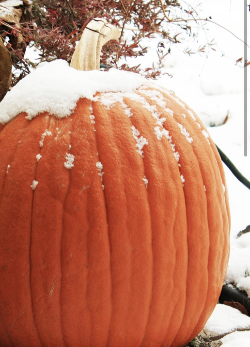 Frosted Pumpkin 1
